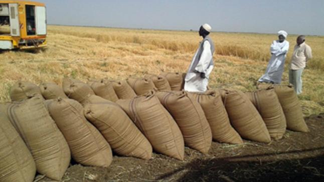 مصادر: مخزون القمح يكفي لخمسة أيام فقط