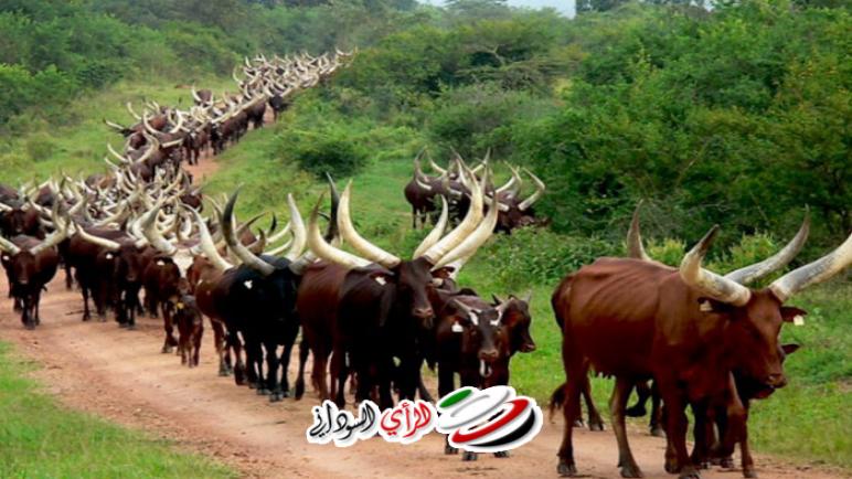 اخبار السودان – الثروة الحيوانية بولاية النيل الأزرق تعدد إنجازاتها